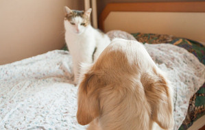 550px-Make-a-Cat-and-Dog-Get-Along-Step-1